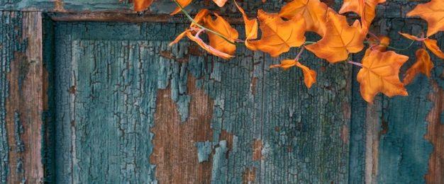 Vrtna vrata zagotavljajo odlično zaščito našega vrta in dvorišča